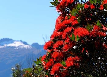 ニュージーランド 花