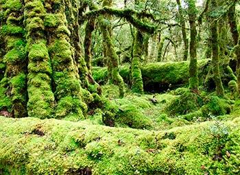 ニュージーランド 自然